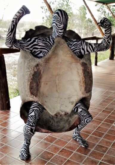 tortue-syl
